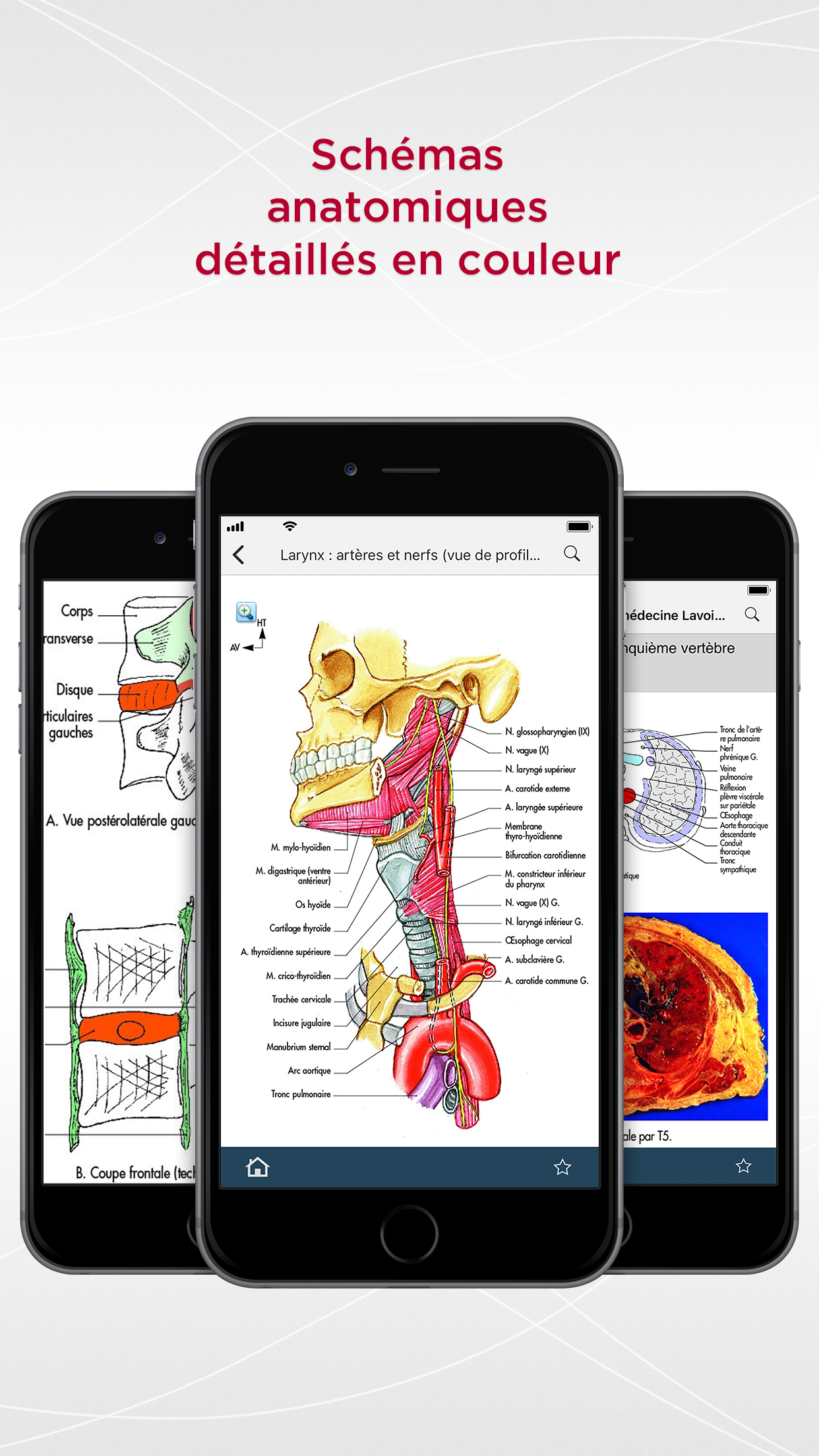 Großzügig Anatomie App Für Ipad Fotos - Anatomie Ideen - finotti.info